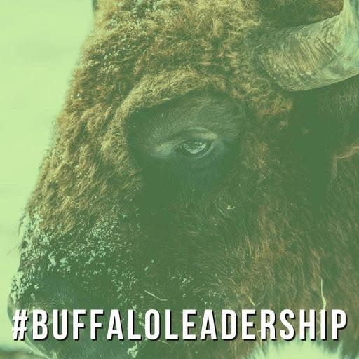BuBuffalo Leadershipffalo Leadership
